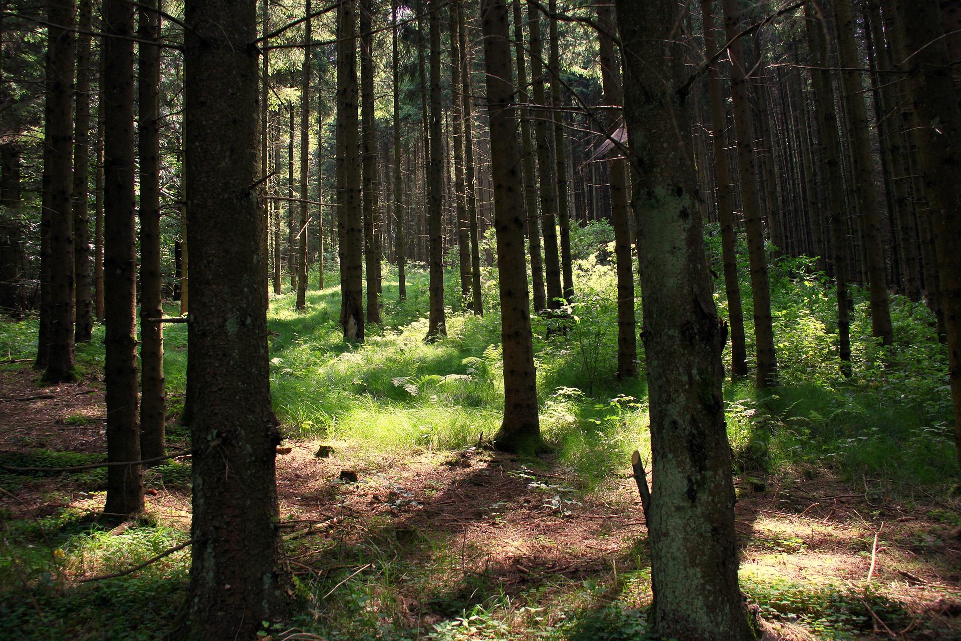 Waldbaden: Workshop mit Wiebke und Rico